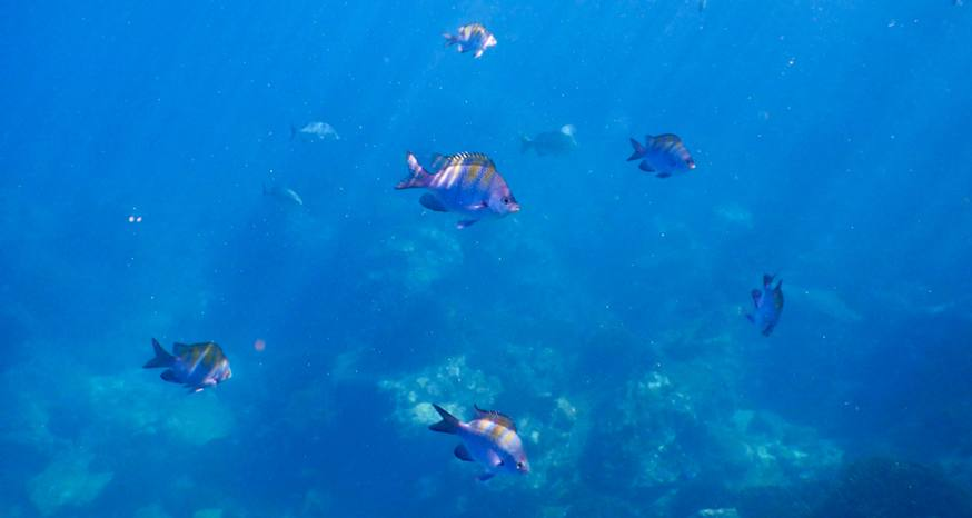 Dazzling kaleidoscope of fish off the coast of Los Cabos