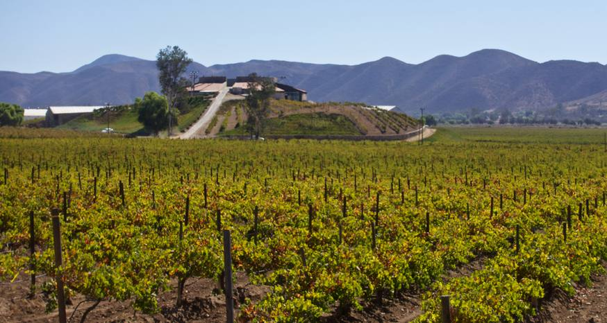 Mexico's wine history older than the United States'