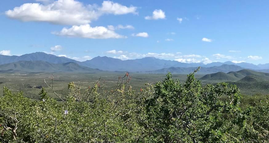 Desert comes alive along Sierra Madre trail