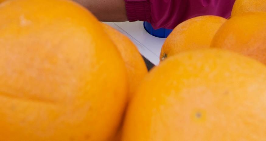 Emergency declared in Todos Santos because of fruit fly