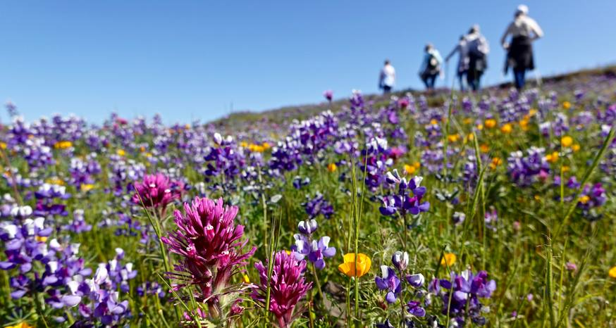Table Mountain awash in color with spring wildflowers
