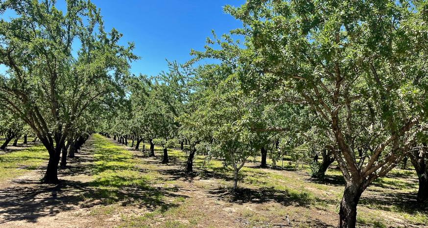 Butte County could contribute to possible record almond crop