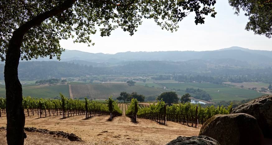 Kunde redefines wine tasting with a view